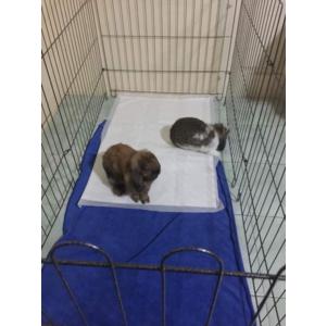 คอกสนาม คอกสุนัข กระต่าย